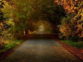 autumn-road by torobala