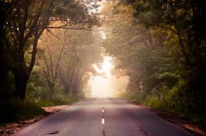 a foggy morning II by torobala