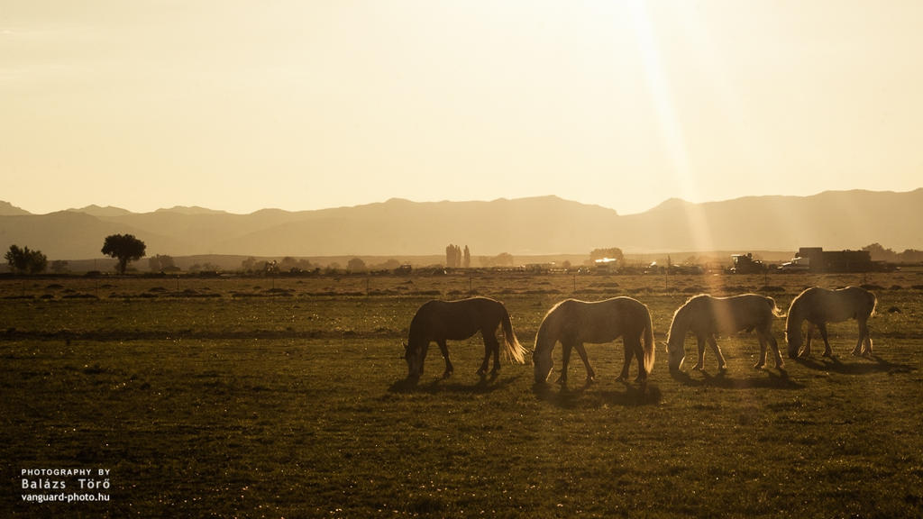 On The Ranch II by torobala