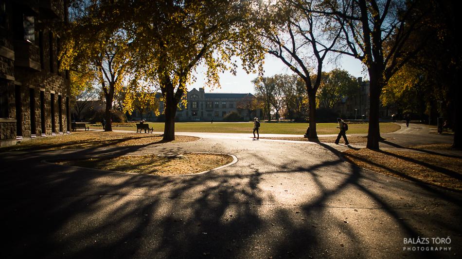 Autumn Shadows by torobala