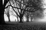 Foggy Path II (BW)