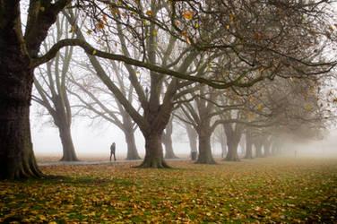 Foggy Path II by torobala