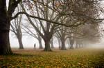Foggy Path II