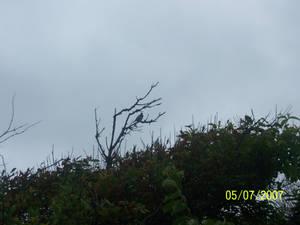 birddy in the storm