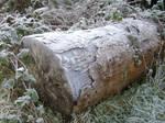 Frosty log (2)