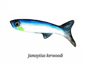 Jamoytius by palaeojota