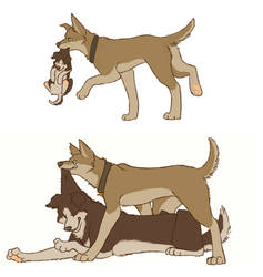 SPN dogs-Winchester Brothers
