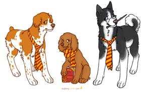 Harry Puppies