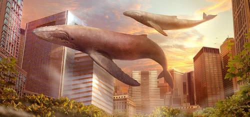 Satory Whales