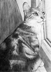 My kitty by AnnaKowalczewska