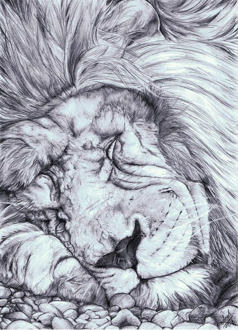 Sleeping lion by AnnaKowalczewska