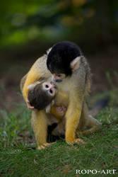 little monkey drinking milk by ropo-art