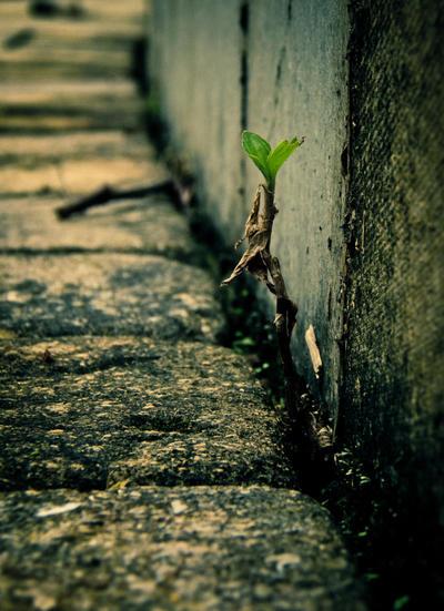 Survive by Daniel8902