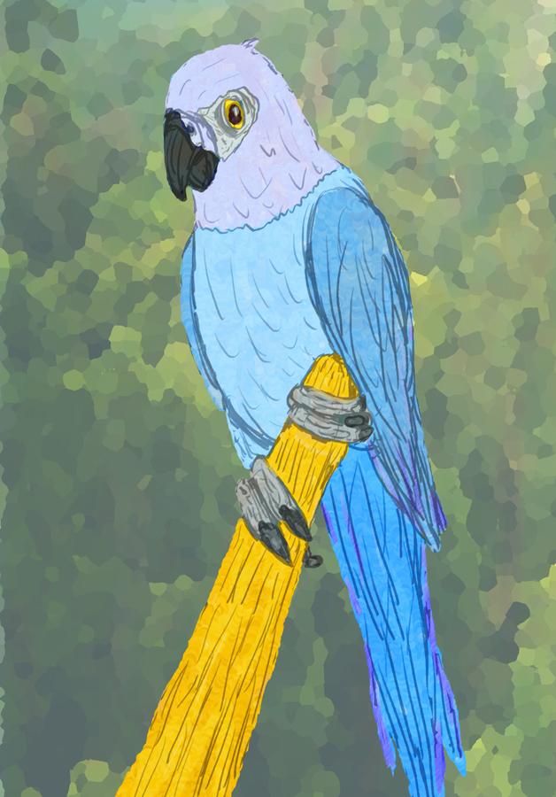 Spix's Macaw: Extinction Memorial #1 by WyreCats