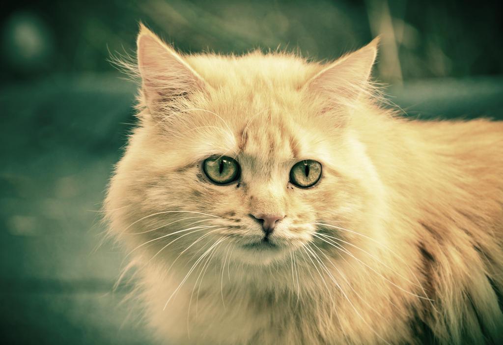 Soft gaze by squirrel-chaser
