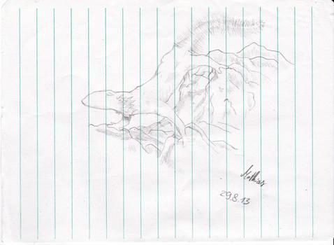 Newt-Axolotl Sketch