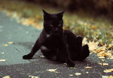 warmcat