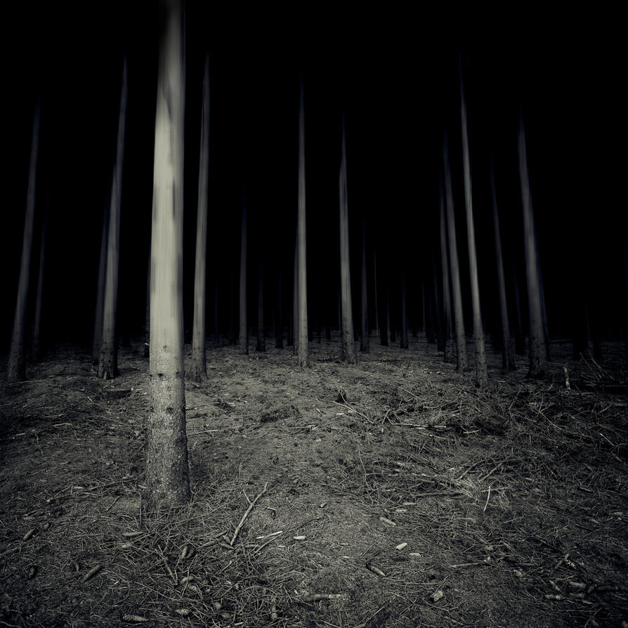 Insidious Woods by Phoenixstamatis