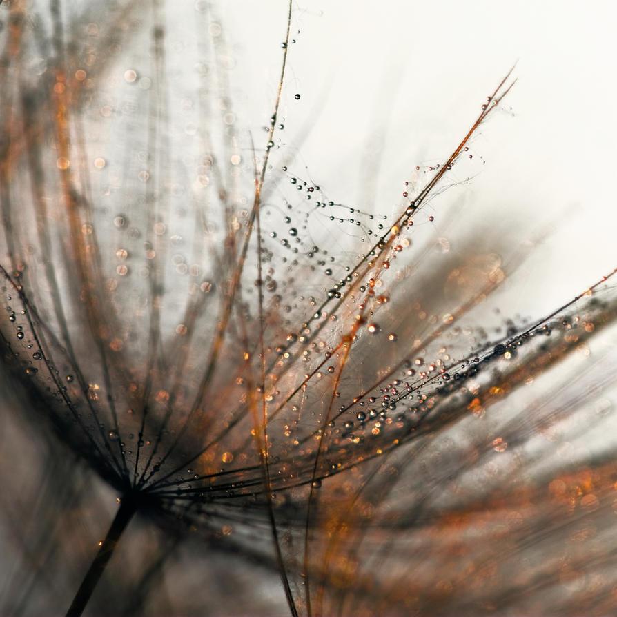 Golden mesh by Phoenixstamatis