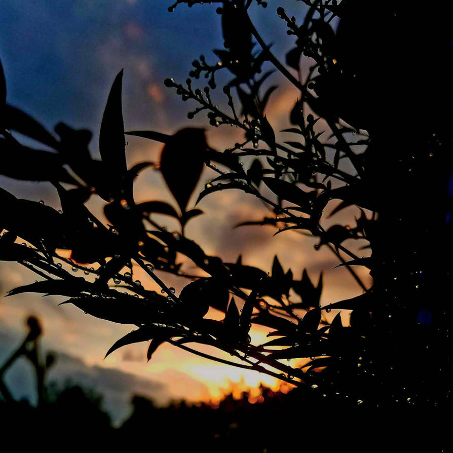 Spring Rain by firestar326