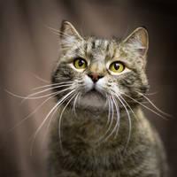kitty by X-chromosome