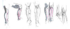 Knees And Lower Leg