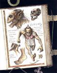Goblin Anatomy