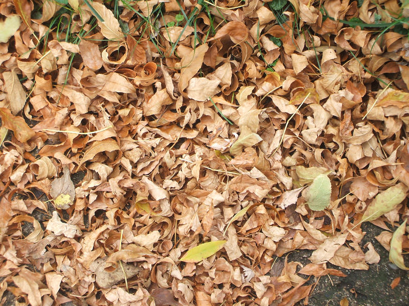 Fall leaves texture-stock pic. by Trippy-CS