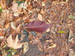 Leaf-wet pavement texture