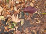 Leaves-wet pavement texture.