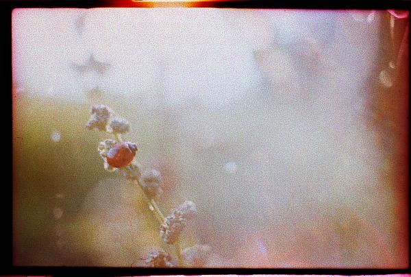 ladybird. by BlackDennie