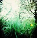 green. by BlackDennie