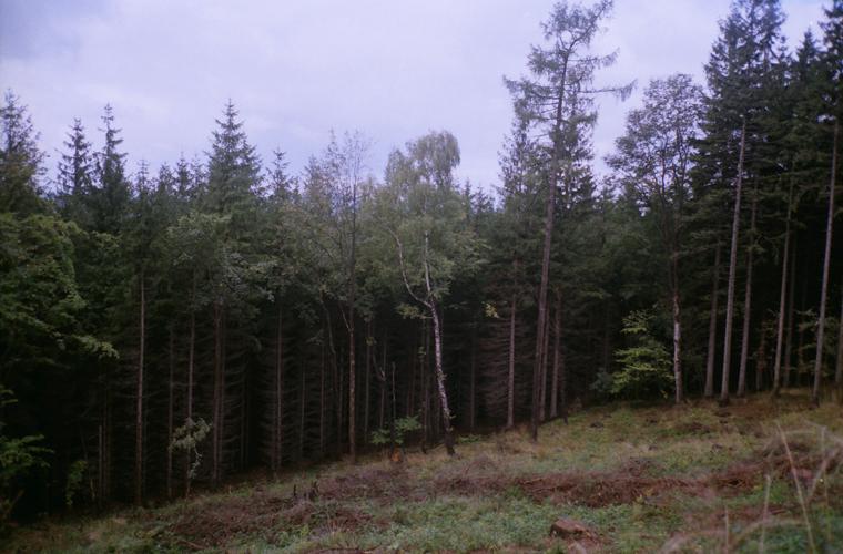 forest. by BlackDennie