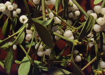 Mistletoe by stockstuffs