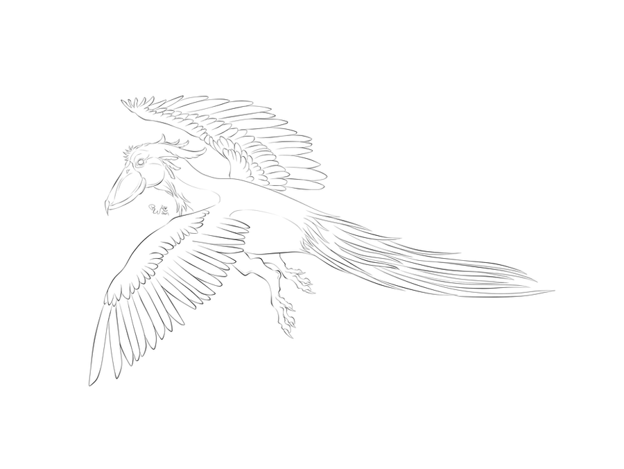 Line Art Feather : References and line art on loftwings deviantart