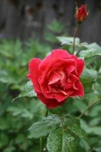 florals14's Profile Picture