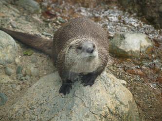 friendly otter