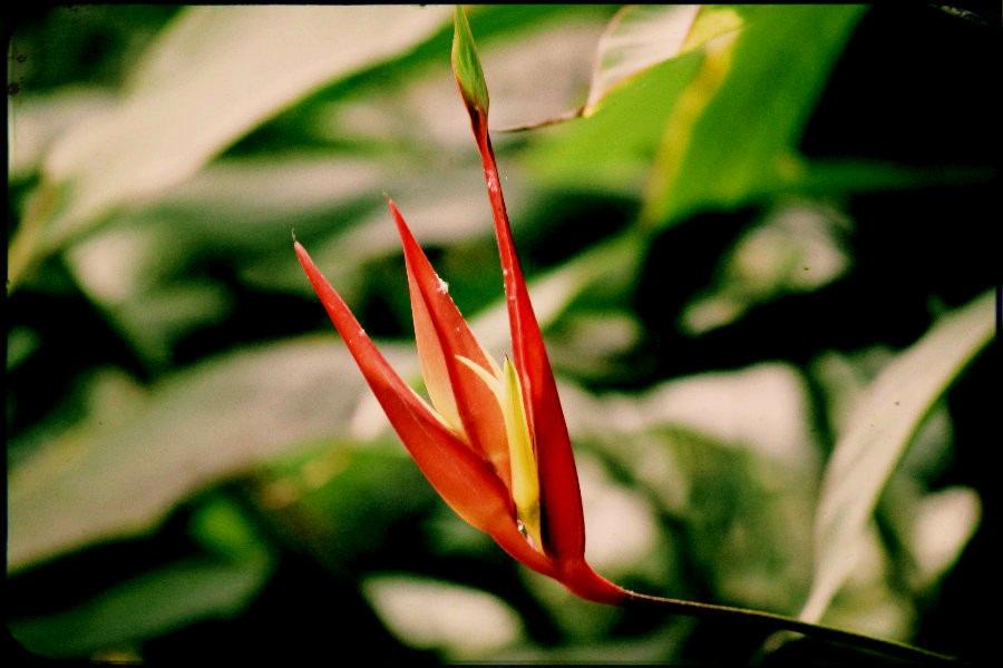 La belle fleur sauvage by hecatebast on deviantart for La belle fleur