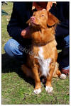 Toller Dog Show Chorzow by silentiofci