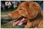 Toller Opole Dog Show by silentiofci