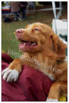 Toller Zabrze Dog Show 06 by silentiofci