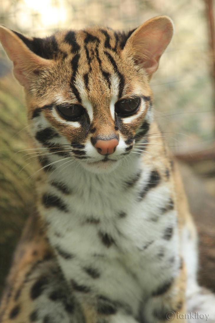 Leopard Print Cat Ears