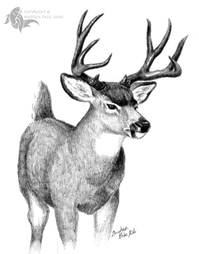 deer drawings - photo #13