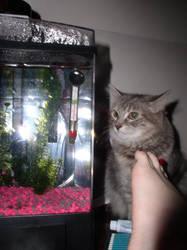 Cat fish foot
