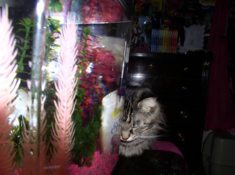 cat lookin at fish tank