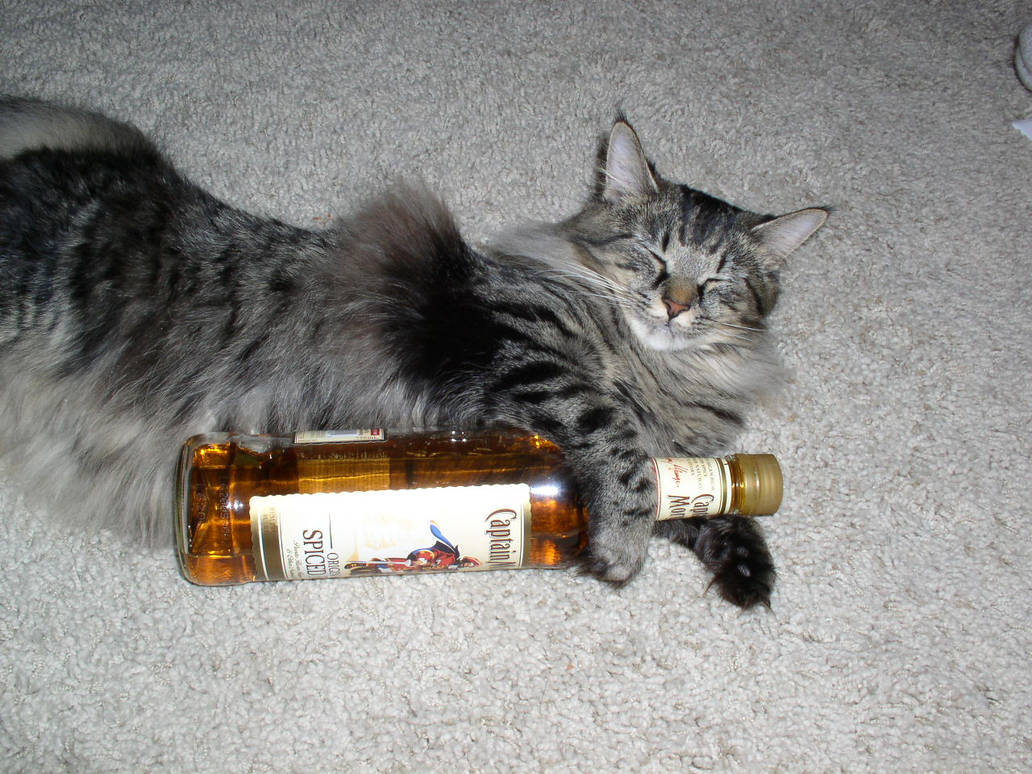 Cat with Bottle of RUM FUNNY