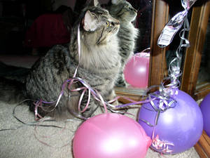 Cat playing w ballons ribbons