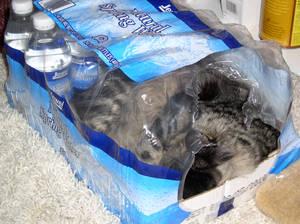 Cat Sleeping in water bottle