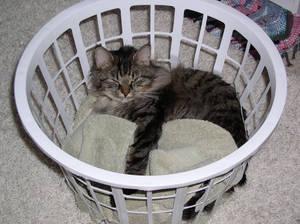 Cat sleeping in basket 2