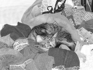 Cat sleeping in clothes funny